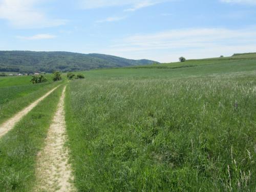 Feld Wiese Weg